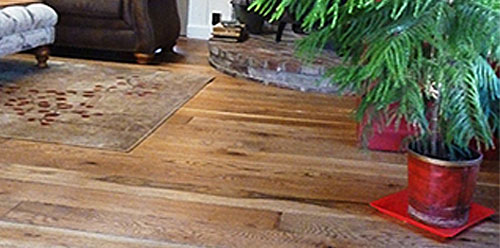 Wood Floor and Plant